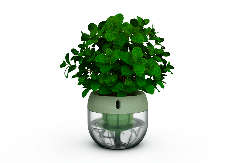 Droponic grey pot